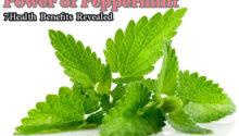 Peppermint health benefits