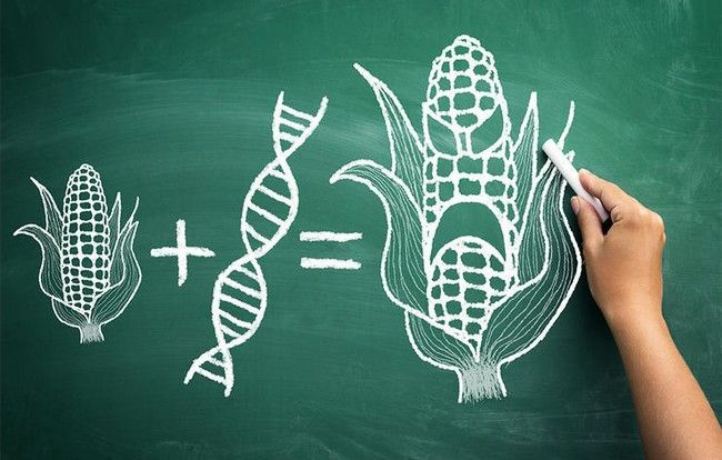 Myth: GMO technology is an exact science.