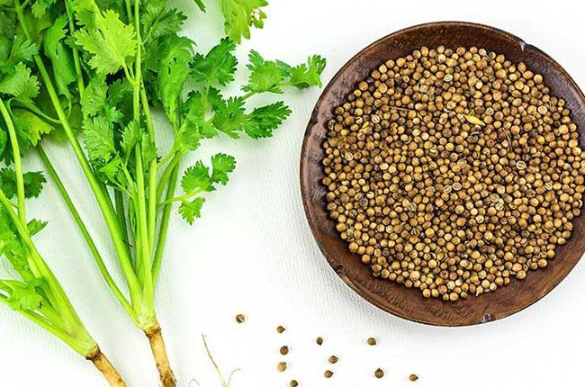 Benefits of Coriander Juice for Weight Loss