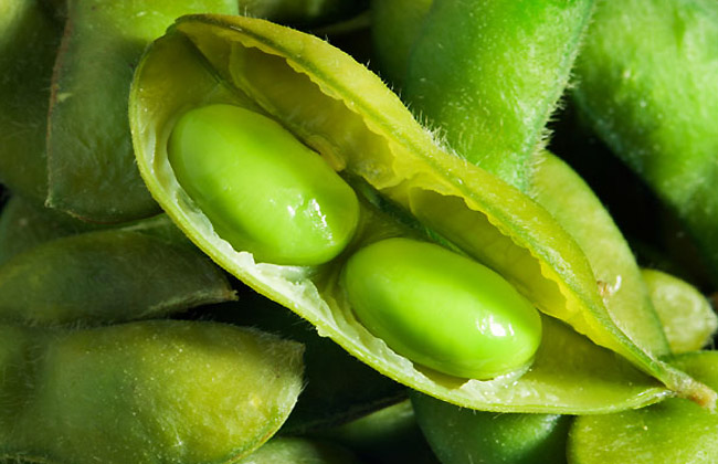 Link Between Soy and Breast Cancer