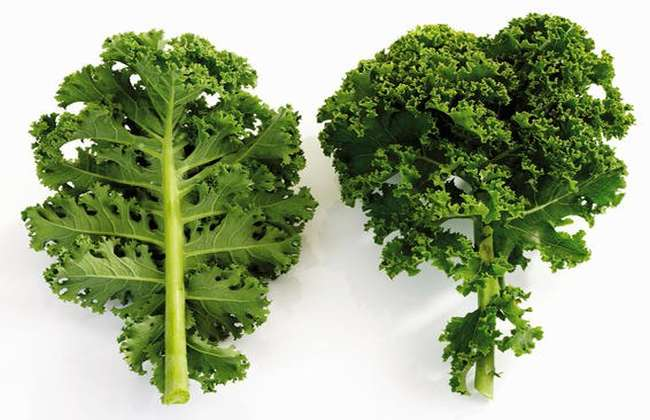 Kale - RA Diet What Not to Eat