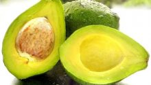 Avocado Leaves Health Benefits Diabetes