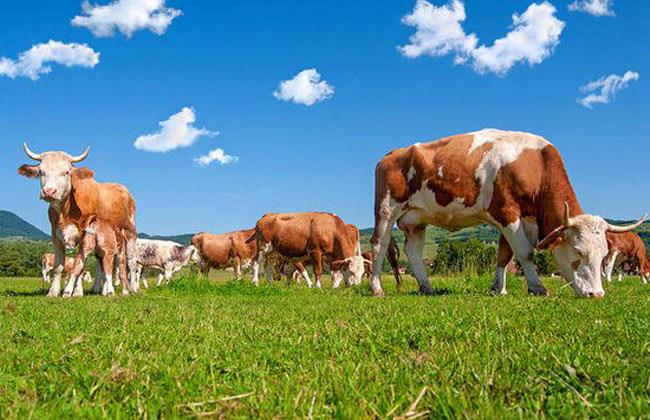 Grass Fed Benefits