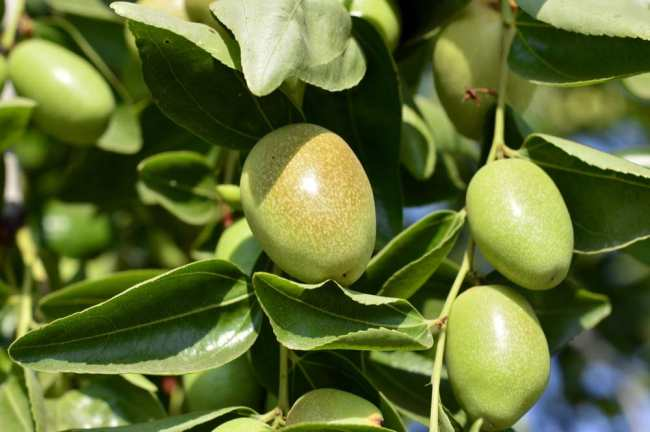 Jojoba Oil For Scalp Psoriasis
