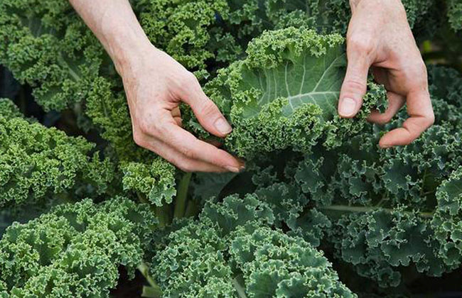 What Vitamins Are In Kale
