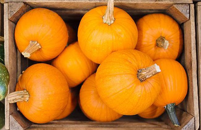 Pumpkin Vitamins