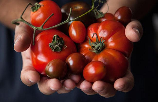 Tomato Acne Wash