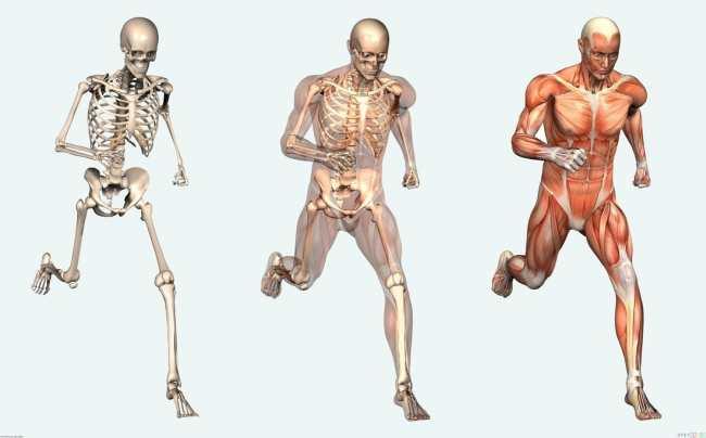 Bone Health - High Sources of Calcium