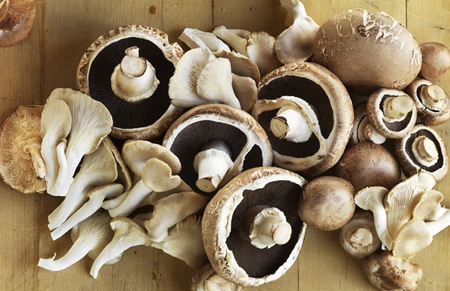 Mushrooms For Health Immune System and Cancer